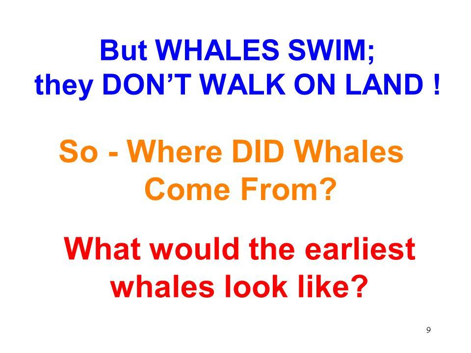 19 Early Whale Teeth… in a 4-legged mammal.