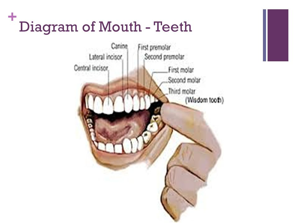 + Placement of Tongue – Sound is Distributed towards Right and Left, NEVER Front Teeth