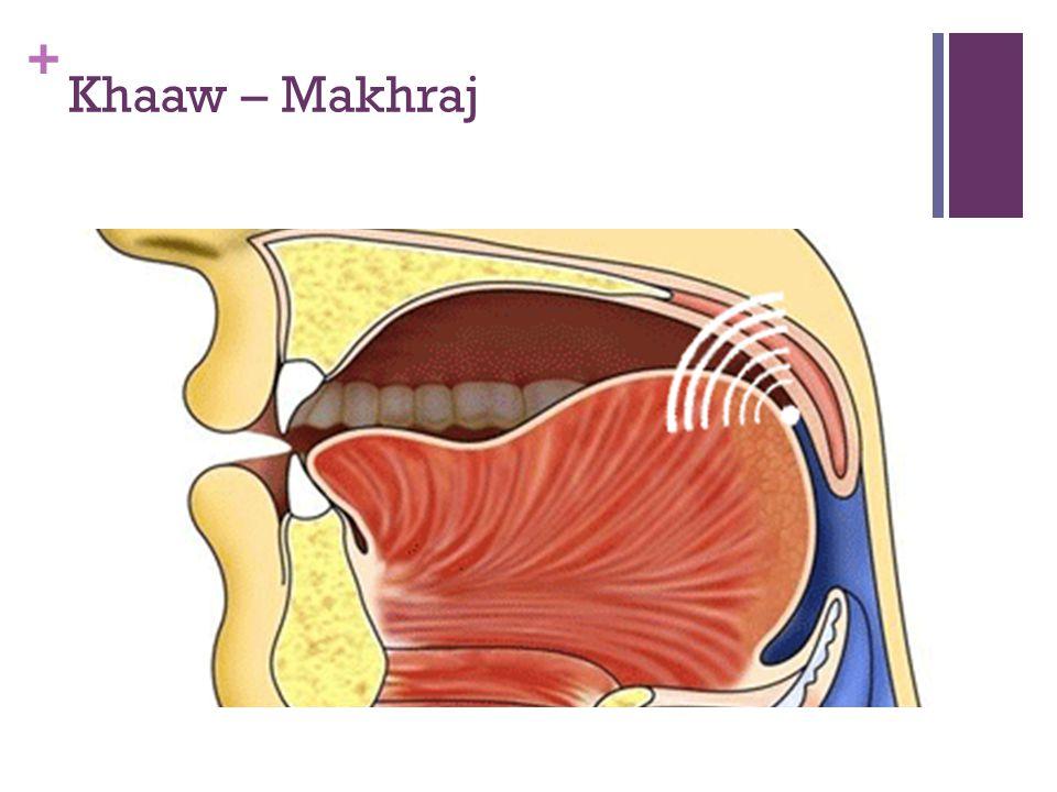 + ش Raising the middle of the tongue towards the hard palate 2.