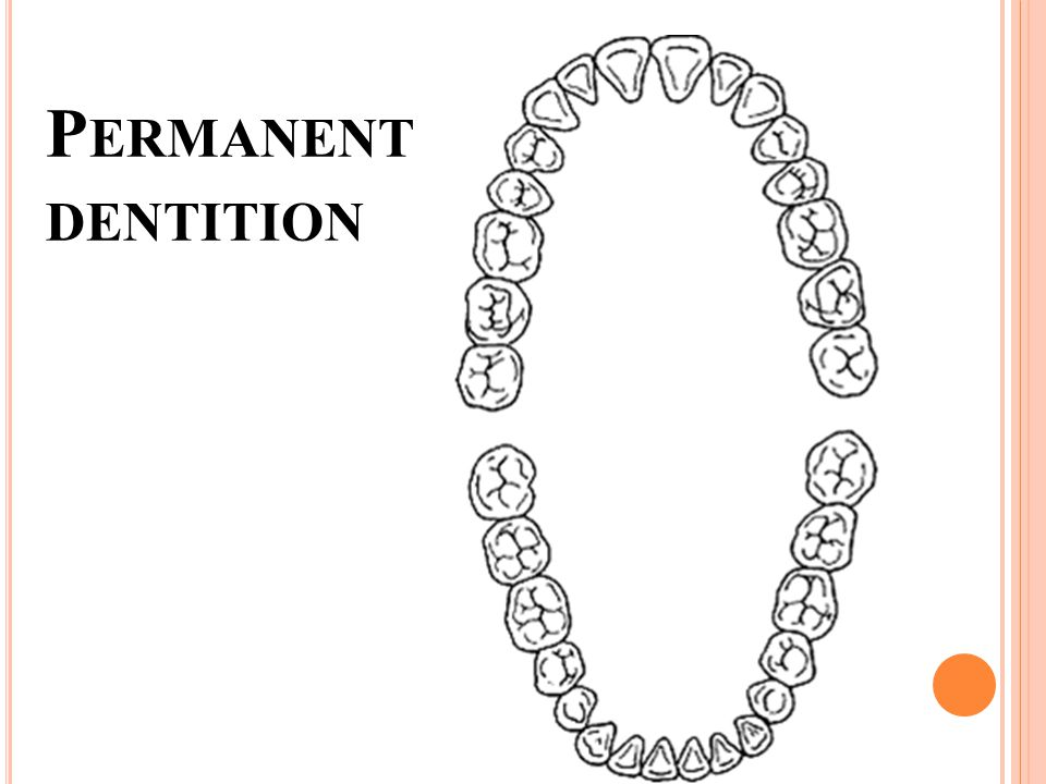 P ERMANENT DENTITION