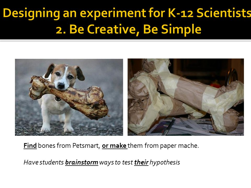 Find bones from Petsmart, or make them from paper mache. Have students brainstorm ways to test their hypothesis