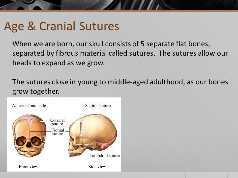 Age & Cranial Sutures When we are born, our skull consists of 5 separate flat bones, separated by fibrous material called sutures.