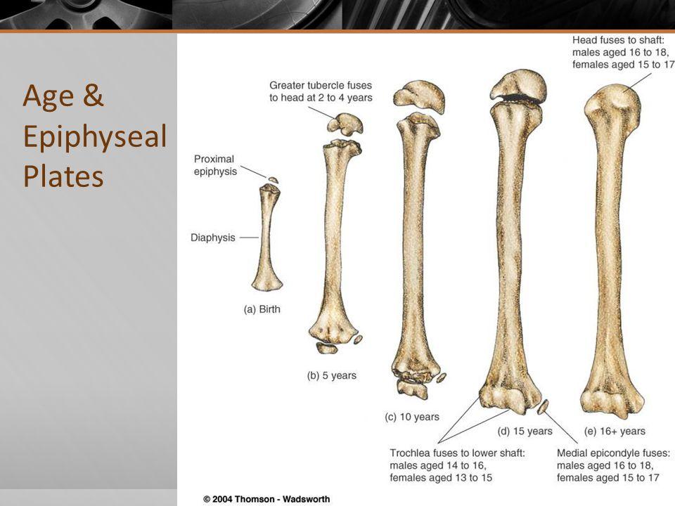 Age & Epiphyseal Plates