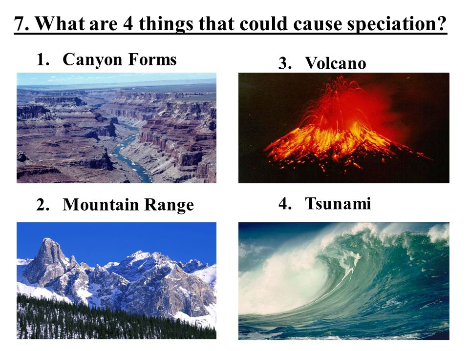 1.Canyon Forms 2.Mountain Range 7. What are 4 things that could cause speciation.