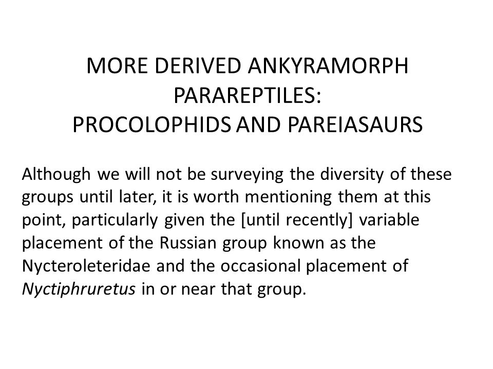 MORE DERIVED ANKYRAMORPH PARAREPTILES: PROCOLOPHIDS AND PAREIASAURS Although we will not be surveying the diversity of these groups until later, it is worth mentioning them at this point, particularly given the [until recently] variable placement of the Russian group known as the Nycteroleteridae and the occasional placement of Nyctiphruretus in or near that group.