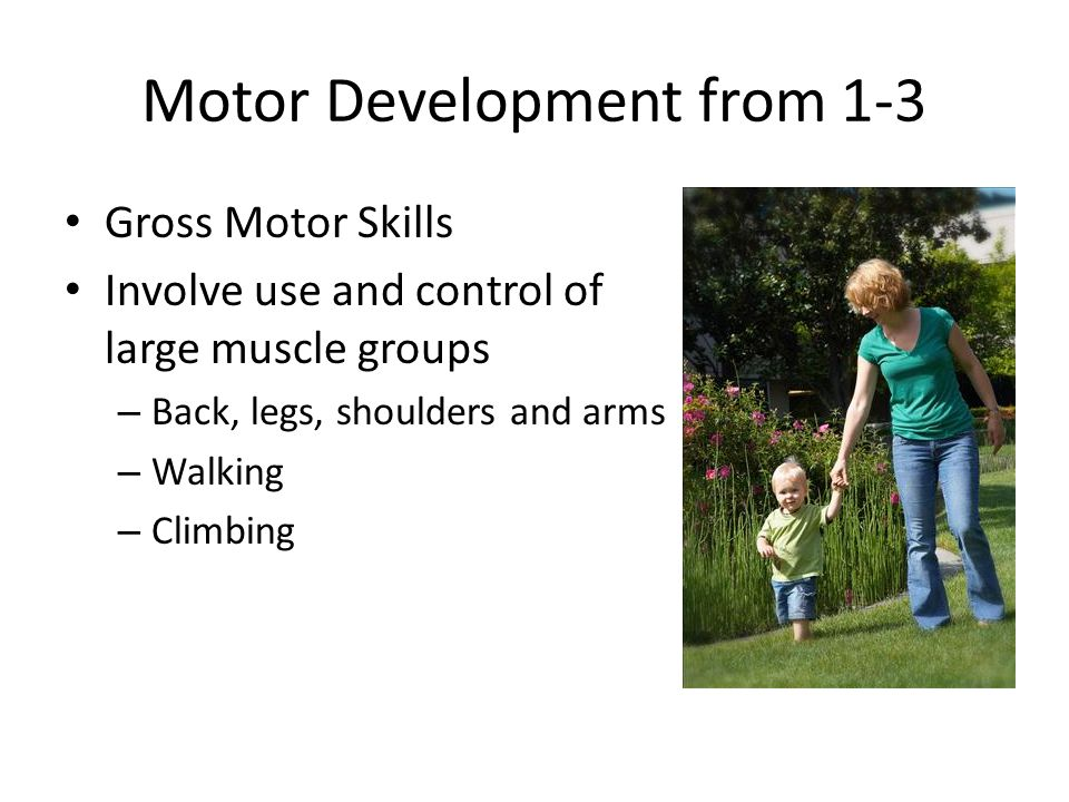 Motor Development from 1-3 Gross Motor Skills Involve use and control of large muscle groups – Back, legs, shoulders and arms – Walking – Climbing