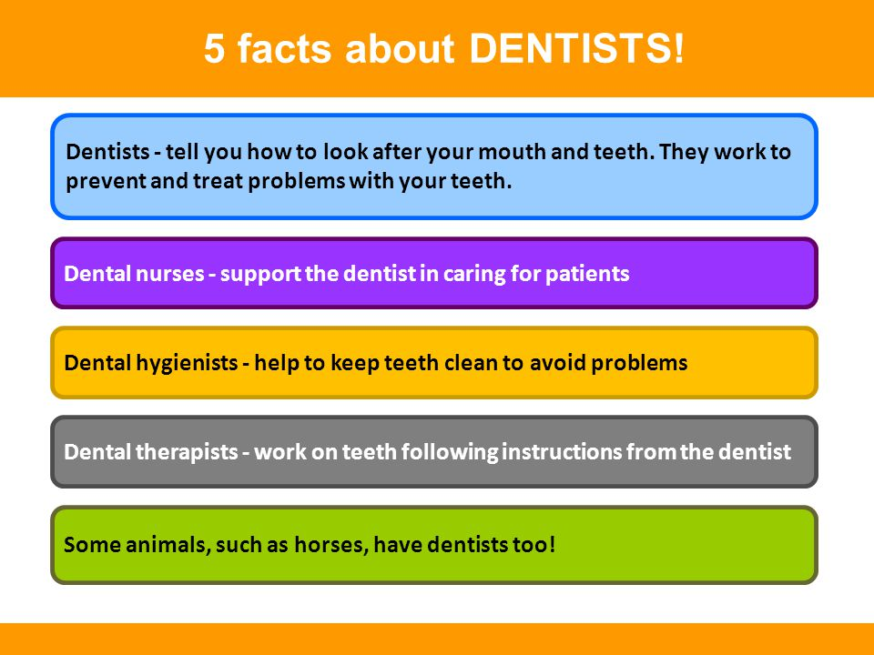 5 facts about DENTISTS! Dental nurses - support the dentist in caring for patients Some animals, such as horses, have dentists too! Dental therapists