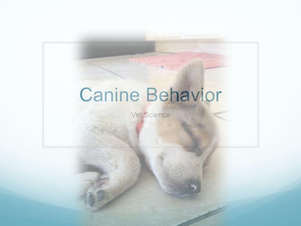 Canine Behavior Vet Science