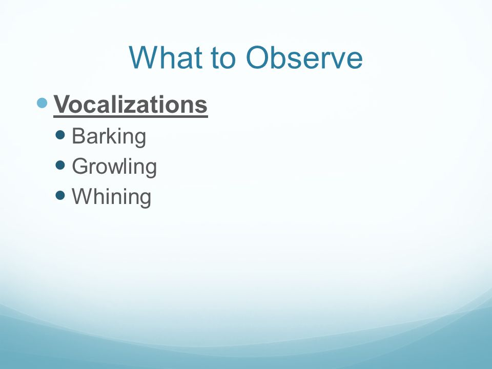 What to Observe Vocalizations Barking Growling Whining