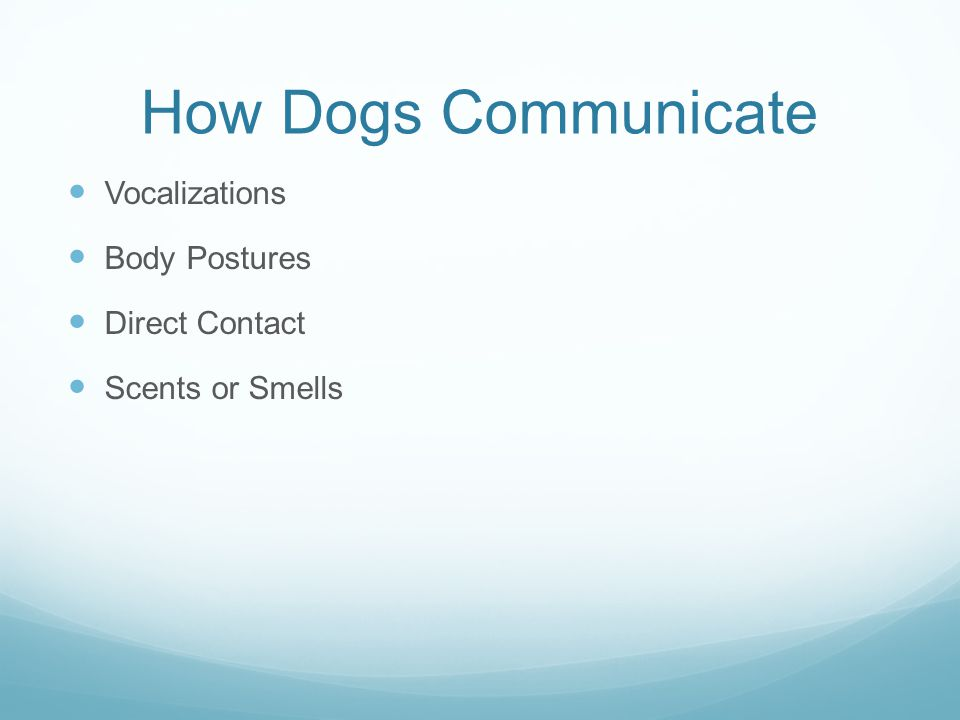 How Dogs Communicate Vocalizations Body Postures Direct Contact Scents or Smells