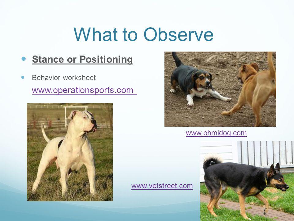 What to Observe Stance or Positioning Behavior worksheet www.operationsports.com www.ohmidog.com www.vetstreet.com