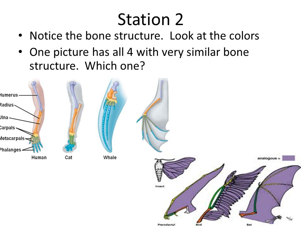 Station 6 1.How can this evidence be used to support the theory of evolution.