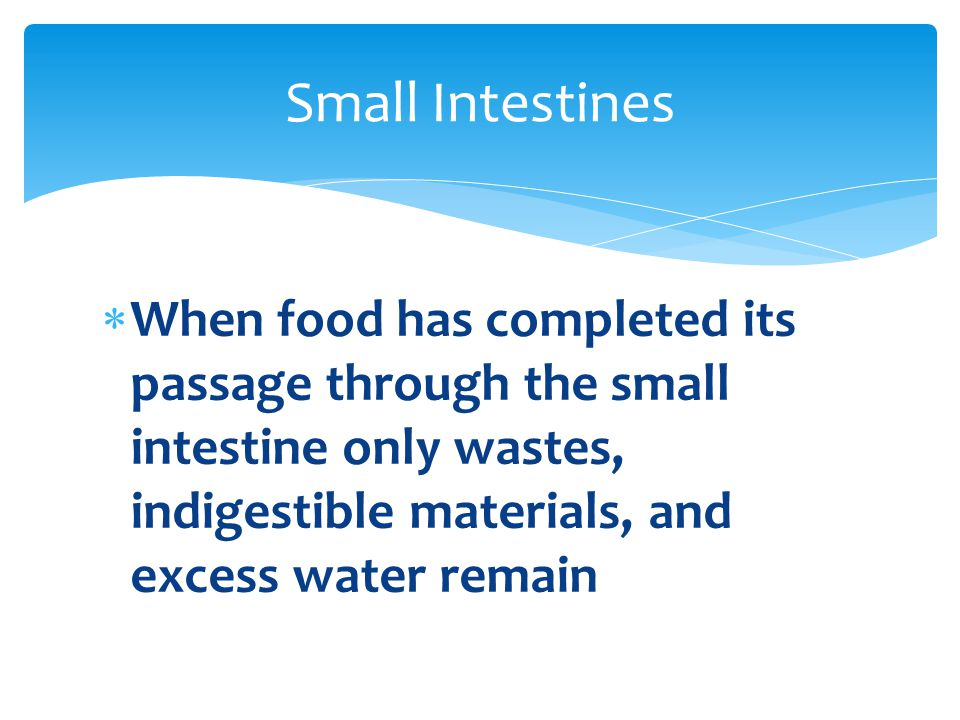  When food has completed its passage through the small intestine only wastes, indigestible materials, and excess water remain Small Intestines