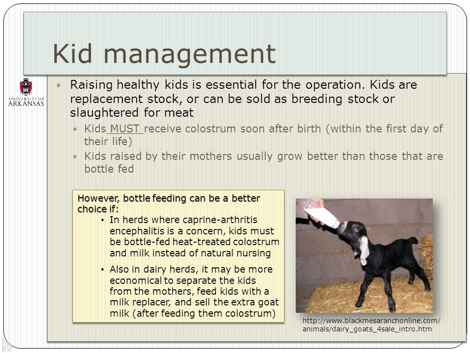 Kid management Raising healthy kids is essential for the operation.
