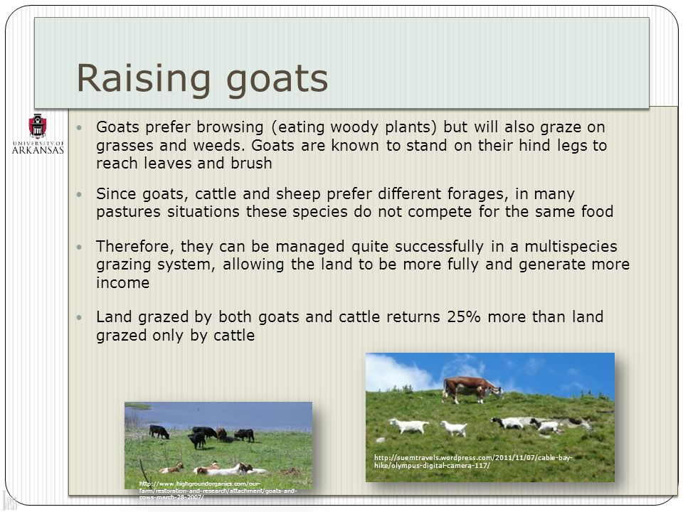 Raising goats Adding goats to a grazing system will have weed control benefits.