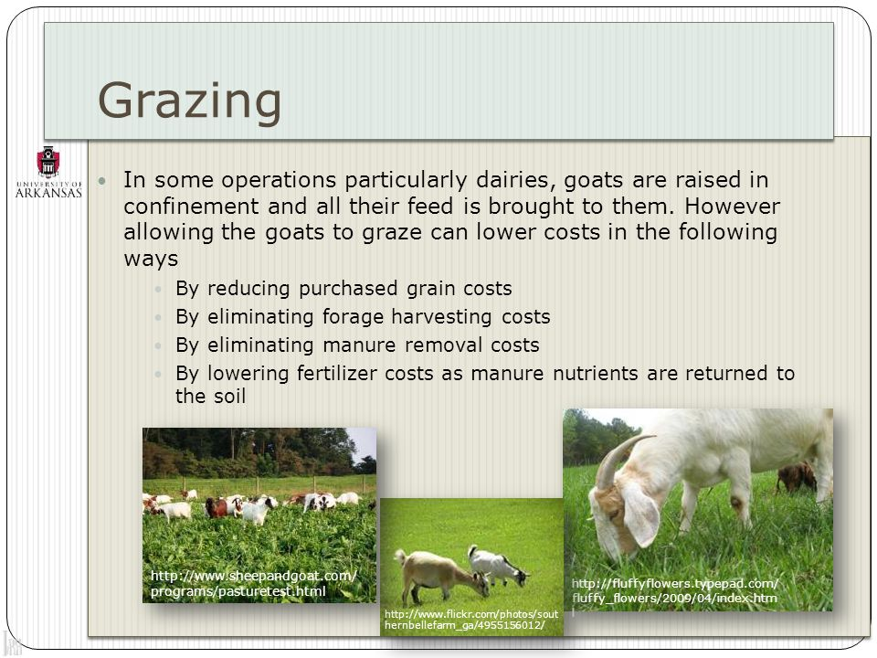 Controlled grazing In the US, continuous grazing is a common practice, characterized by giving the animals unrestricted access to all the pastures throughout the year However feeding goats in a sustainable and economical way is better accomplished by a controlled, rotational grazing system, also known as management intensive grazing (MIG) This system is more commonly used for cattle than with sheep or goats It is based in dividing the pasture into smaller areas and controlling the access of the animals into each paddock Better use of the pasture More uniform grazing Can harvest surplus for hay Water is closer to the animals http://meridianjacobs.wordpress.com/tag/intensive-grazing/