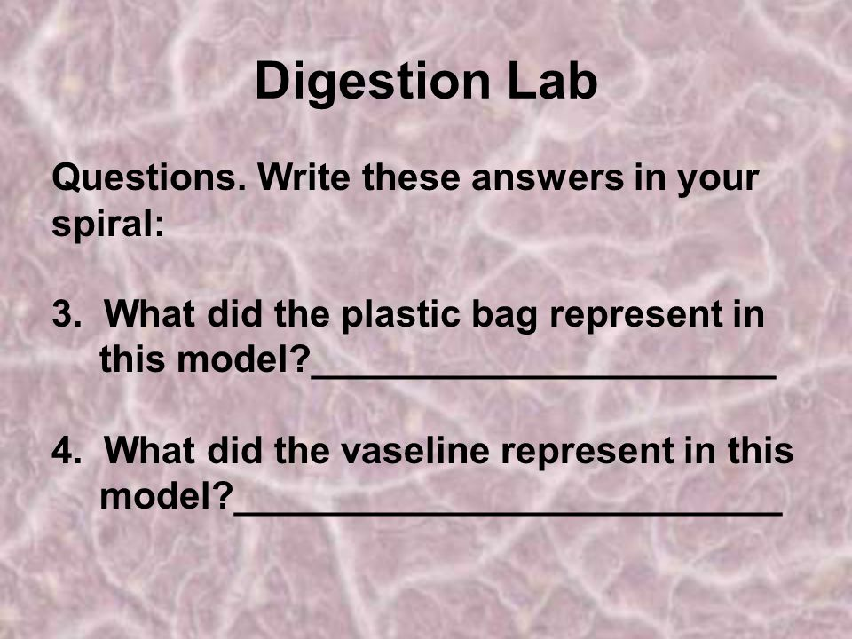 Digestion Lab Questions.Write these answers in your spiral: 3.