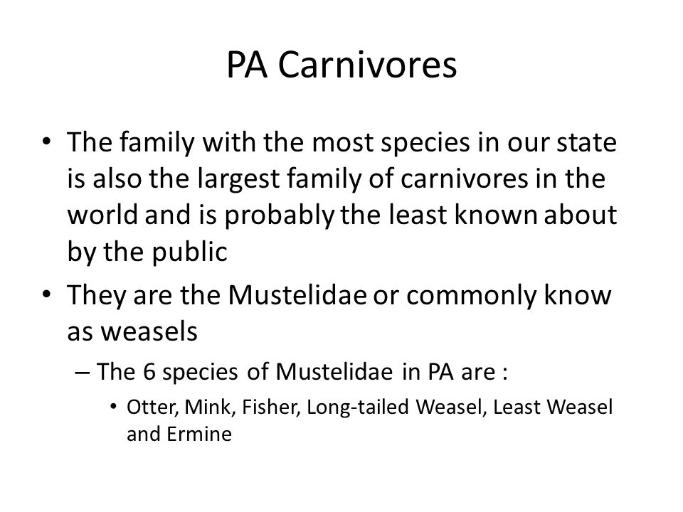 PA Carnivores The family with the most species in our state is also the largest family of carnivores in the world and is probably the least known about by the public They are the Mustelidae or commonly know as weasels – The 6 species of Mustelidae in PA are : Otter, Mink, Fisher, Long-tailed Weasel, Least Weasel and Ermine