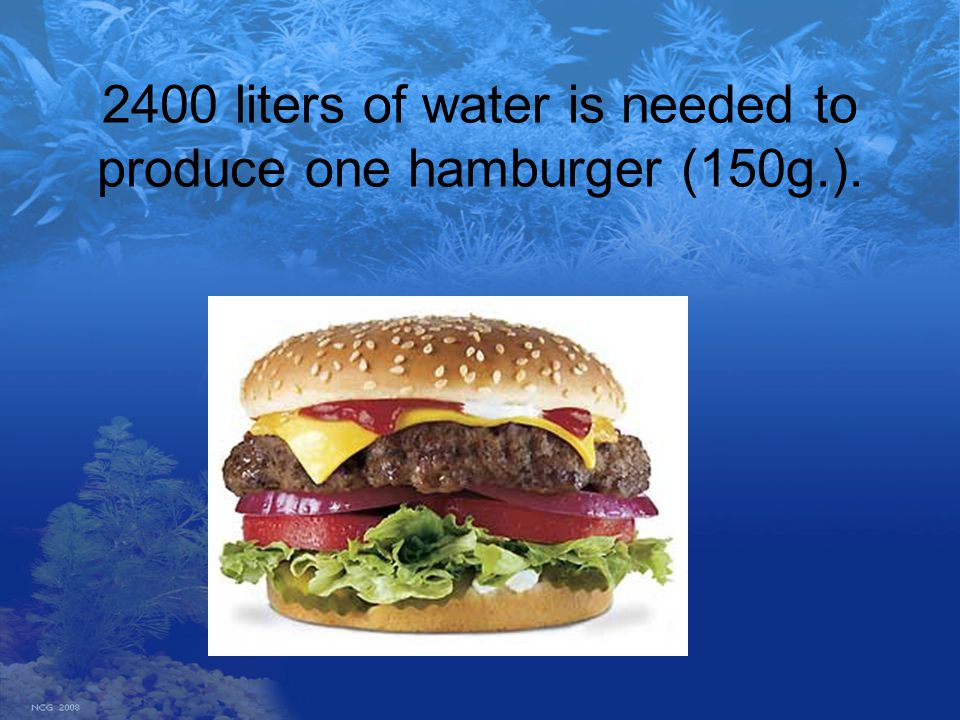 2400 liters of water is needed to produce one hamburger (150g.).