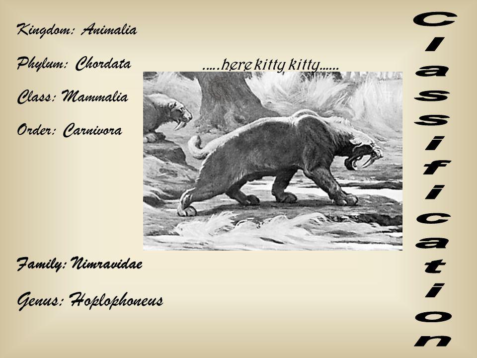 Kingdom: Animalia Phylum: Chordata Class: Mammalia Order: Carnivora Family: Nimravidae Genus: Hoplophoneus.….here kitty kitty…...