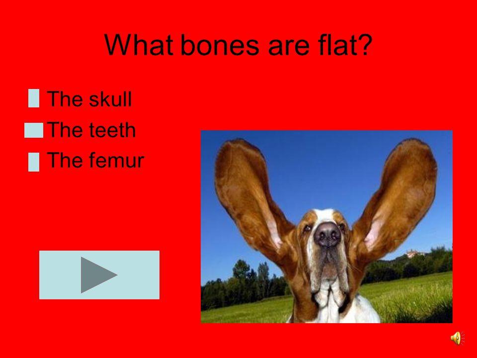 We have 300 bones 208 bones 206 bones