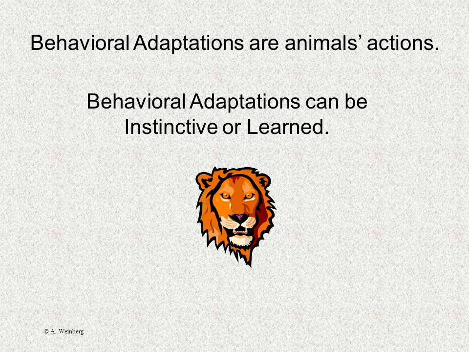 © A.Weinberg Behavioral Adaptations are animals' actions.