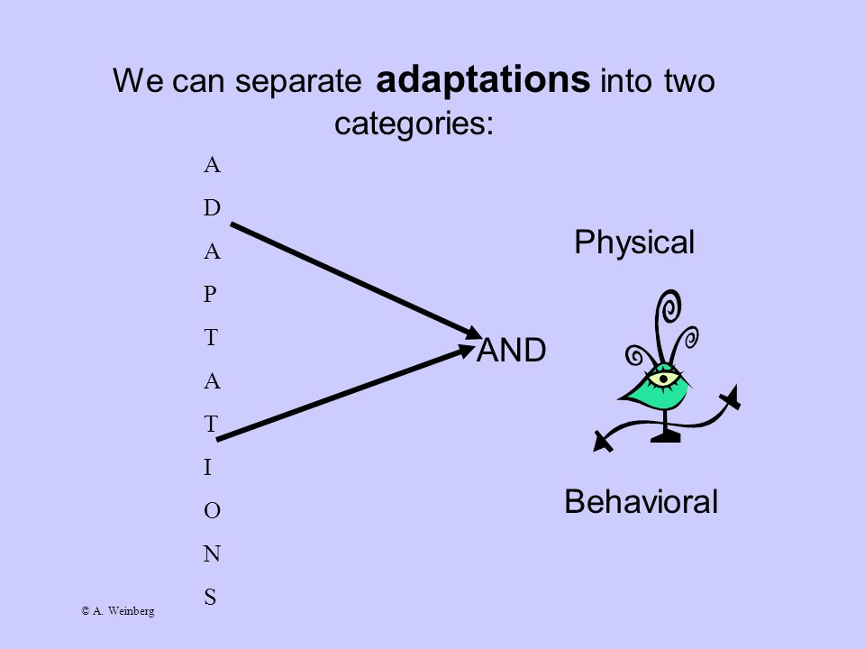 © A. Weinberg We can separate adaptations into two categories: Physical AND Behavioral A D A P T A T I O N S