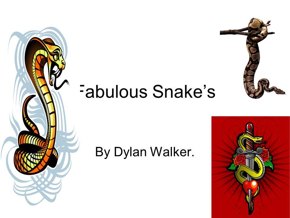 Fabulous Snake's By Dylan Walker.