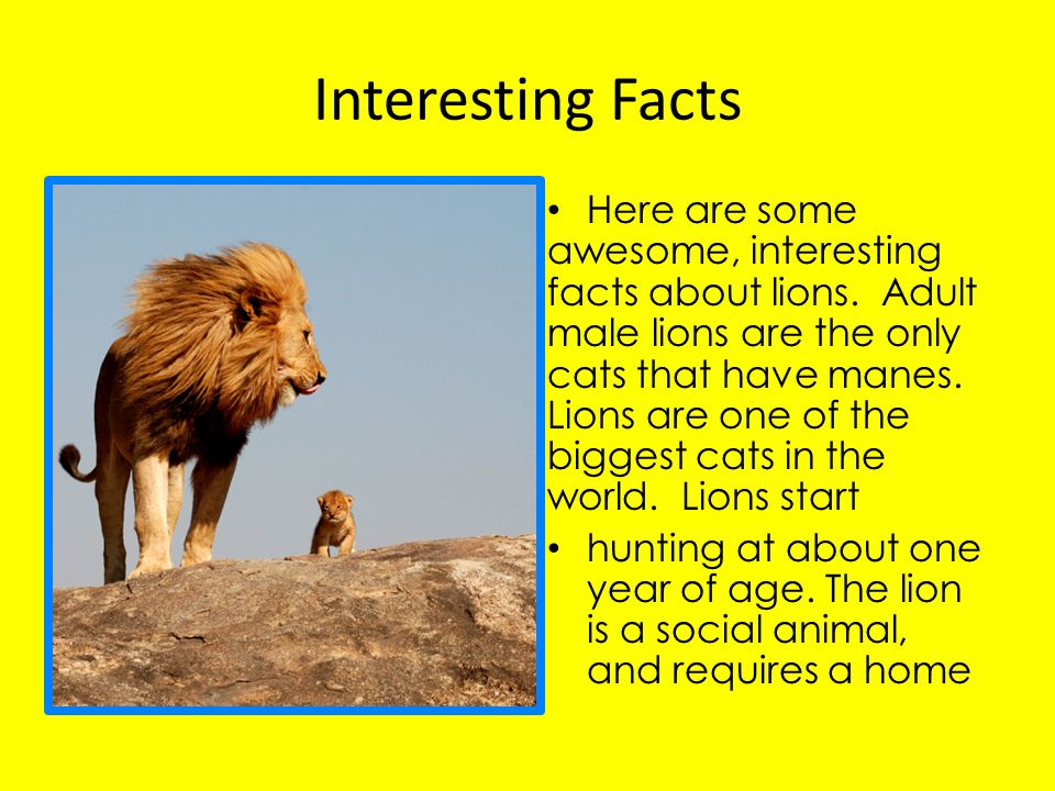 Interesting Facts Here are some awesome, interesting facts about lions.