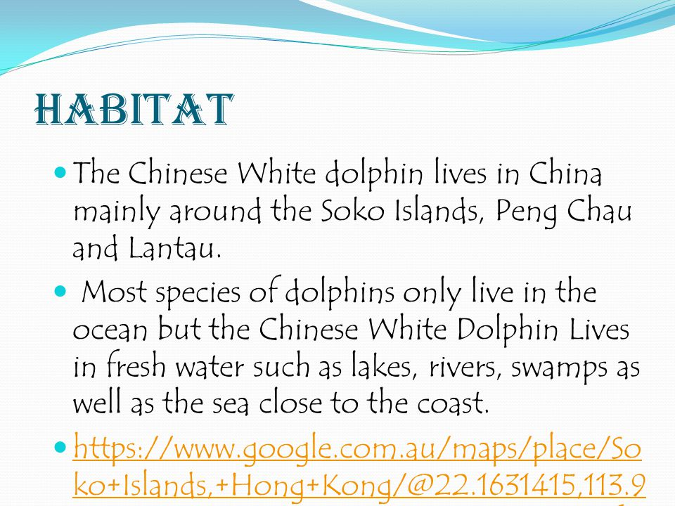 habitat The Chinese White dolphin lives in China mainly around the Soko Islands, Peng Chau and Lantau.