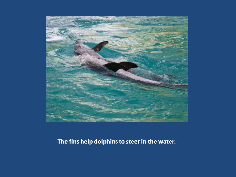 A sleeping dolphin usually has one eye closed.