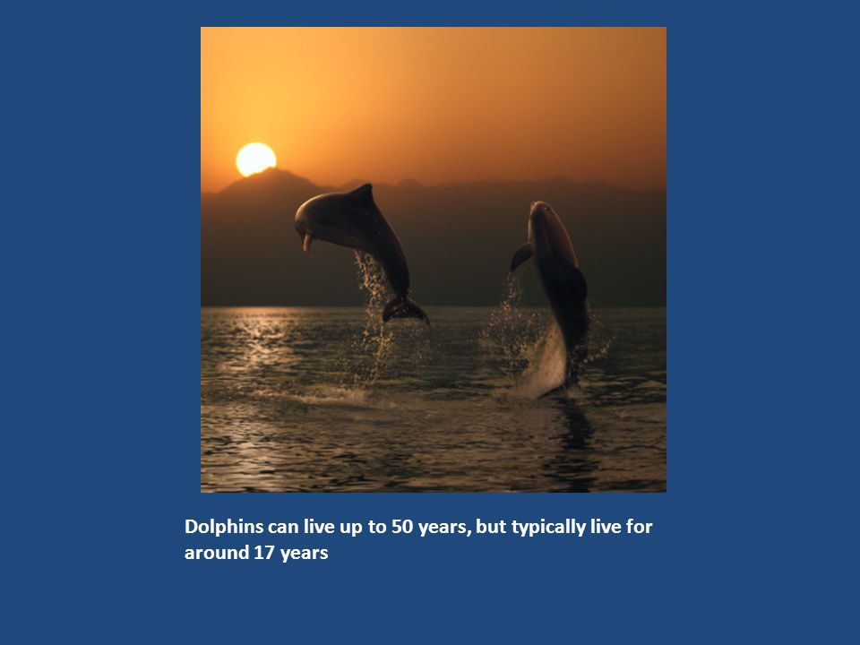 There are 37 species of dolphins, including this estuarine dolphin.