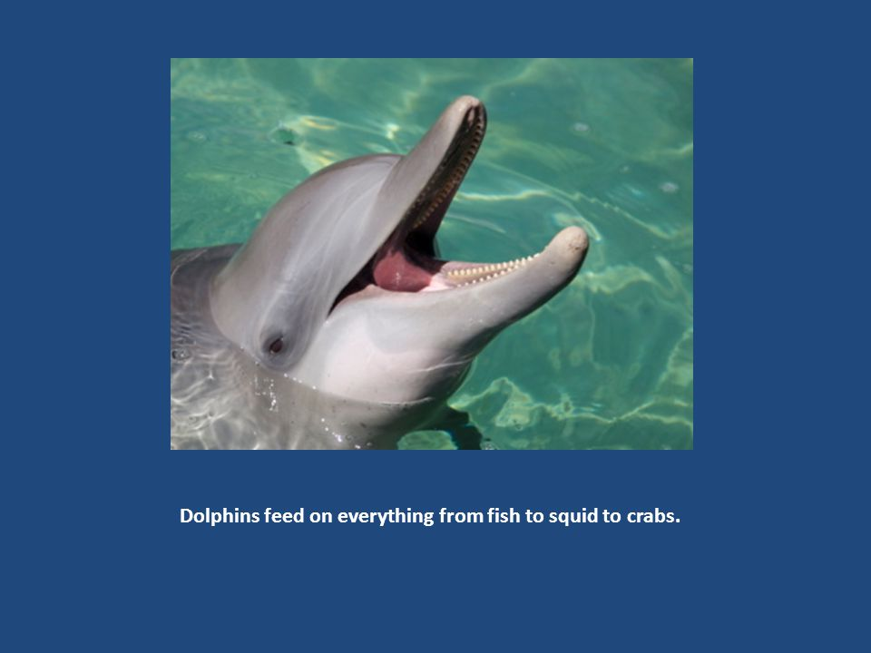 Dolphins, like other mammals, breathe oxygen from the air, but can remain under water for up to an hour.