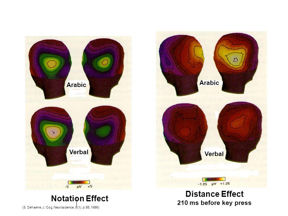 (S. Dehaene, J. Cog. Neuroscience, 8(1), p.56, 1996) Arabic Verbal Notation Effect Arabic Verbal Distance Effect 210 ms before key press