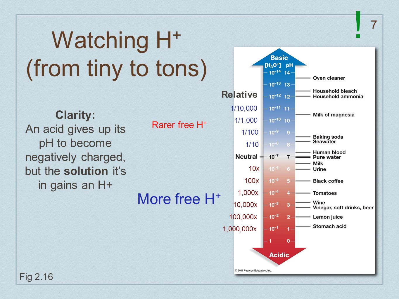 7 Watching H + (from tiny to tons) Fig 2.16 10x 100x 1,000x 10,000x 100,000x 1,000,000x 1/10 1/100 1/1,000 1/10,000 Relative More free H + Rarer free H + Clarity: An acid gives up its pH to become negatively charged, but the solution it's in gains an H+ !