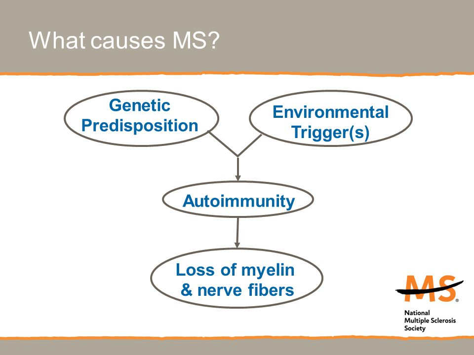 Environmental Trigger(s) Autoimmunity Genetic Predisposition What causes MS.