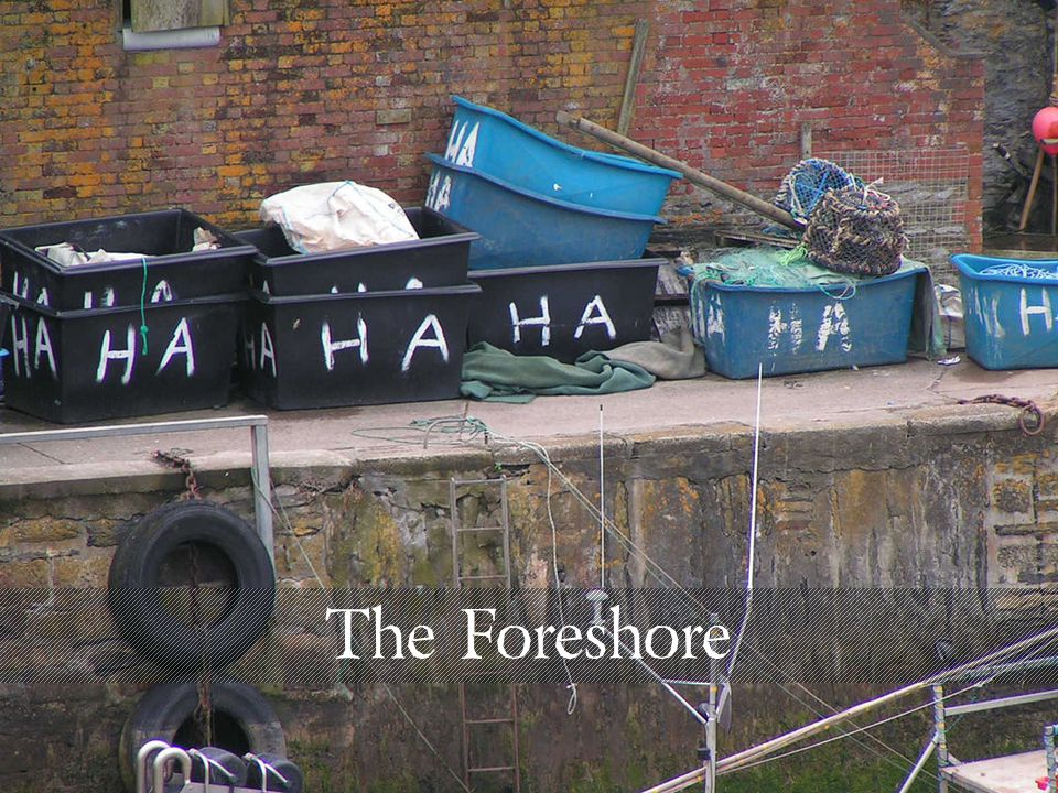 The Foreshore