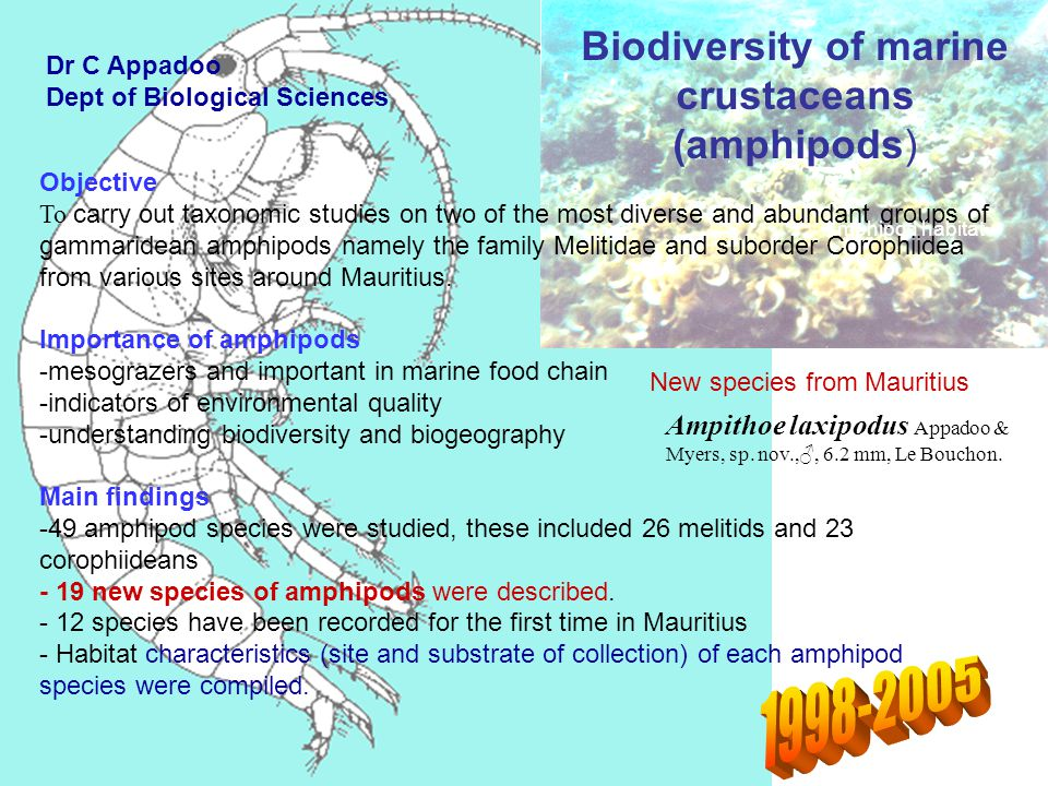 Biodiversity of marine crustaceans (amphipods) Ampithoe laxipodus Appadoo & Myers, sp.