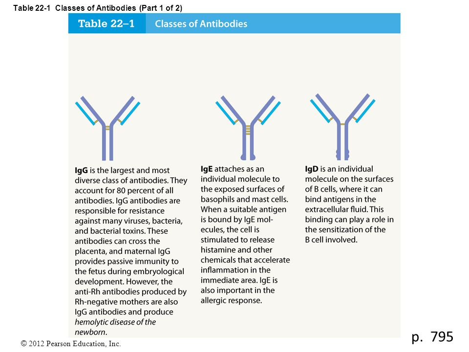 © 2012 Pearson Education, Inc. Table 22-1 Classes of Antibodies (Part 1 of 2) p. 795