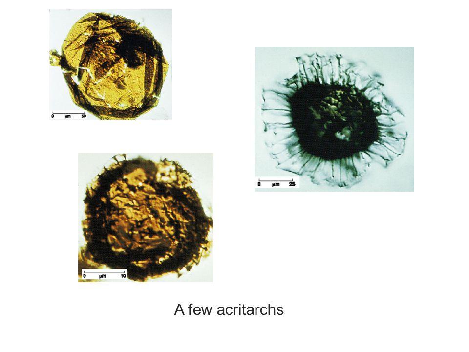 A few acritarchs