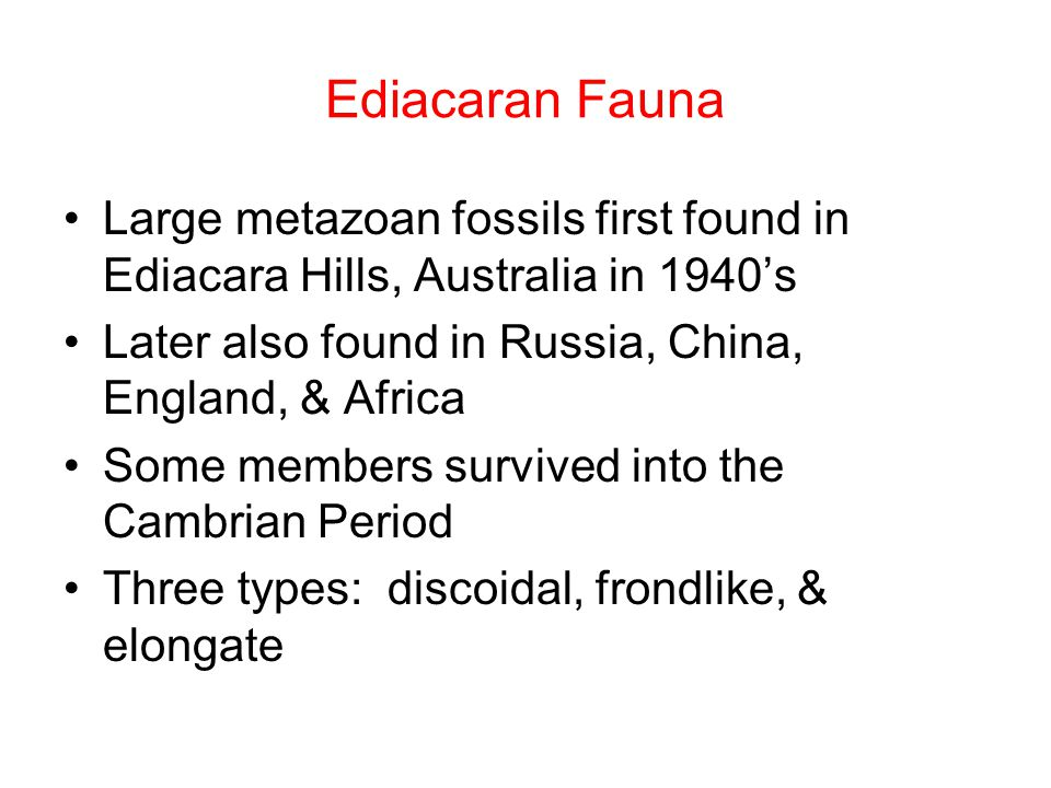 Ediacaran Fauna Large metazoan fossils first found in Ediacara Hills, Australia in 1940's Later also found in Russia, China, England, & Africa Some members survived into the Cambrian Period Three types: discoidal, frondlike, & elongate