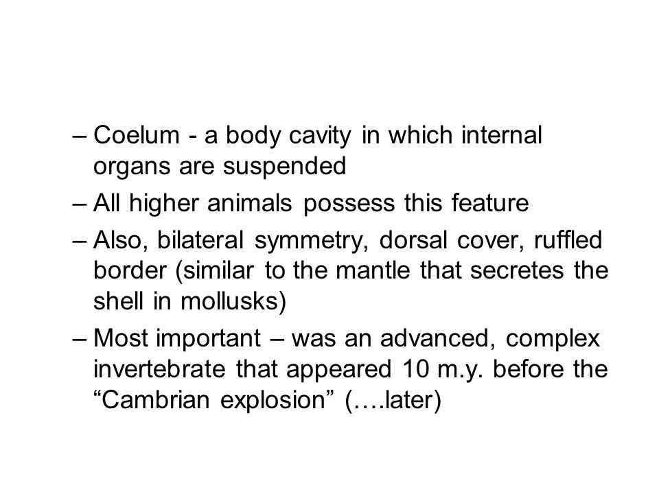 –Coelum - a body cavity in which internal organs are suspended –All higher animals possess this feature –Also, bilateral symmetry, dorsal cover, ruffled border (similar to the mantle that secretes the shell in mollusks) –Most important – was an advanced, complex invertebrate that appeared 10 m.y.