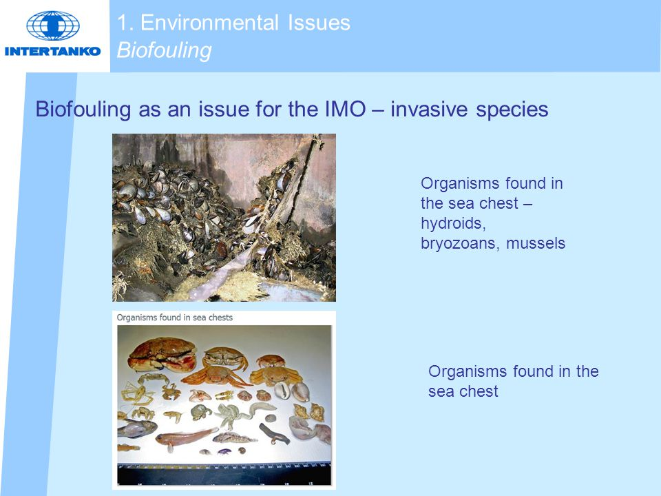 Biofouling as an issue for the IMO – invasive species Organisms found in the sea chest – hydroids, bryozoans, mussels 1.