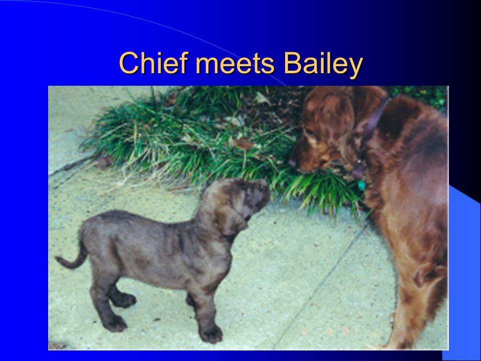 Chief meets Bailey