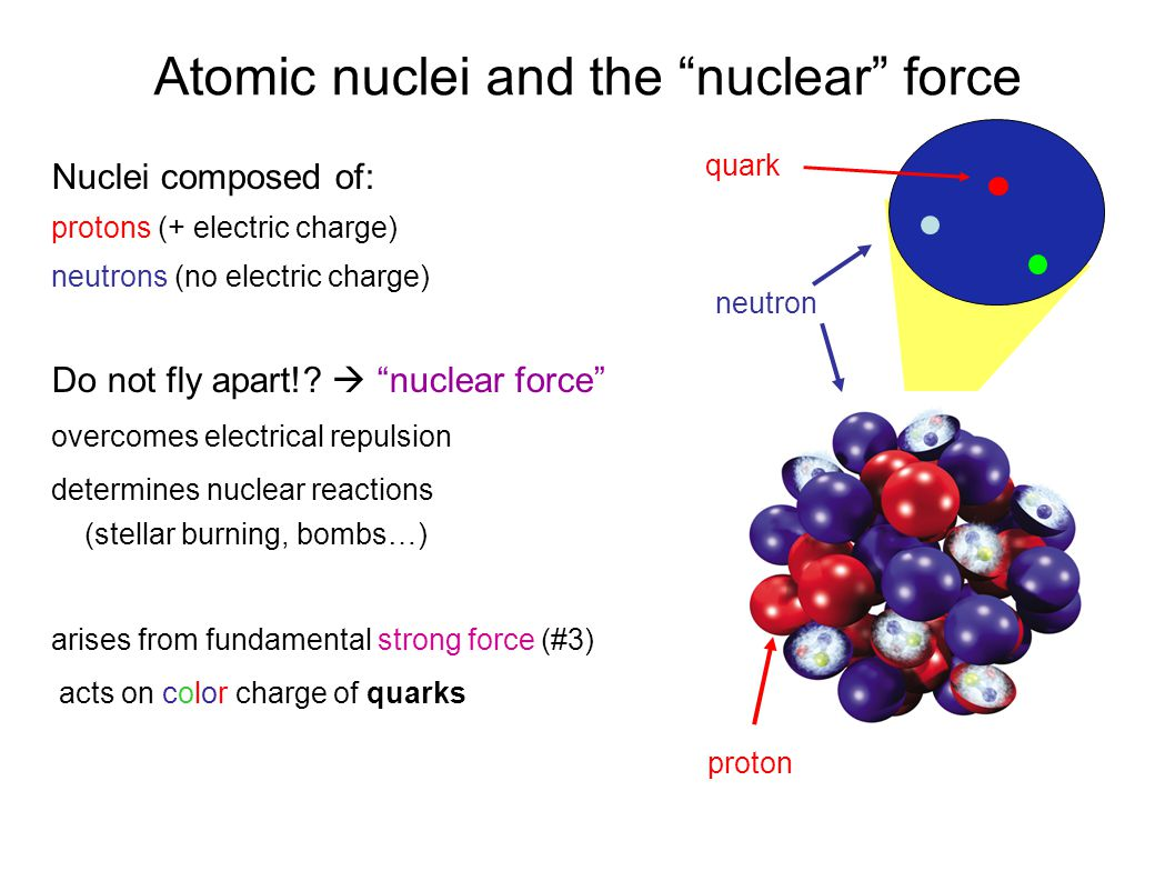 """Atomic nuclei and the """"nuclear"""" force Nuclei composed of: protons (+ electric charge) neutrons (no electric charge) Do not fly apart!?  """"nuclear fo"""