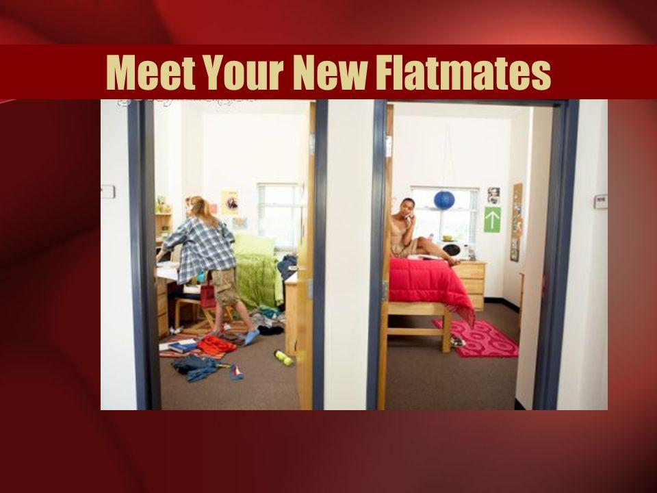 Meet Your New Flatmates