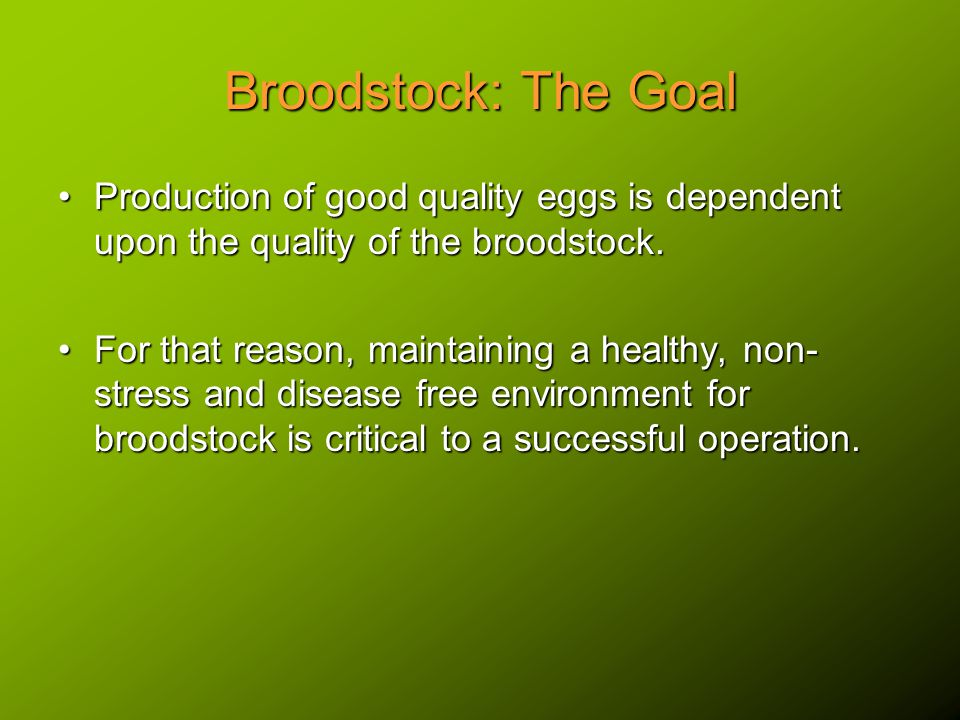 Broodstock Selection The selection of fish with desirable hereditary qualities typical of improved strains such as rapid growth potential, tolerance to poor water quality, strong appetite, omnivorous feeding regime.The selection of fish with desirable hereditary qualities typical of improved strains such as rapid growth potential, tolerance to poor water quality, strong appetite, omnivorous feeding regime.