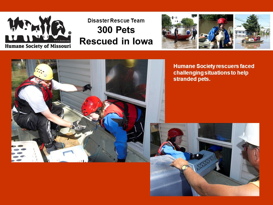 Disaster Rescue Team 300 Pets Rescued in Iowa Humane Society rescuers faced challenging situations to help stranded pets.