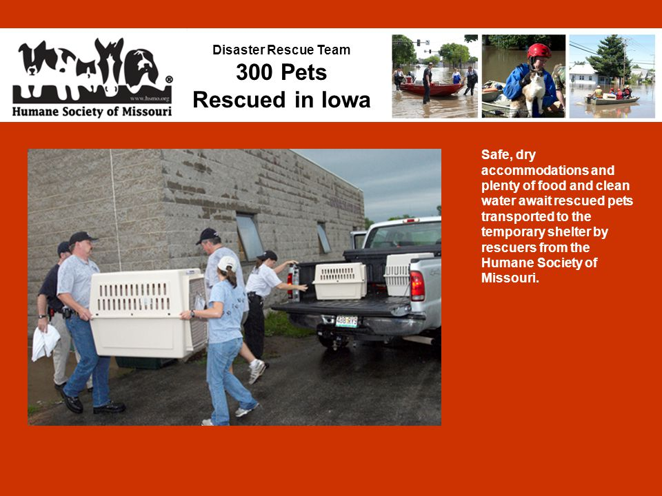 Disaster Rescue Team 300 Pets Rescued in Iowa Safe, dry accommodations and plenty of food and clean water await rescued pets transported to the temporary shelter by rescuers from the Humane Society of Missouri.