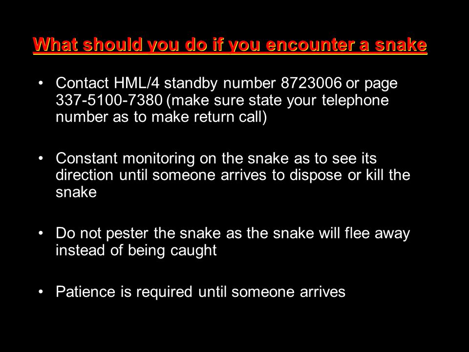What should you do if you encounter a snake Contact HML/4 standby number 8723006 or page 337-5100-7380 (make sure state your telephone number as to ma